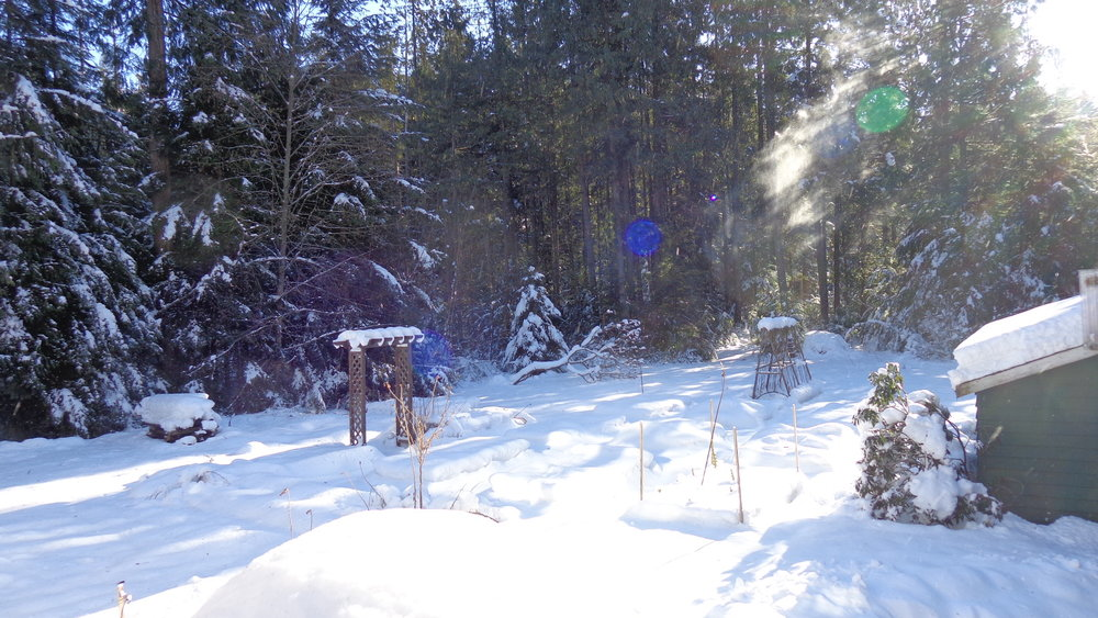 Winter garden at Blue Mountain Zendo