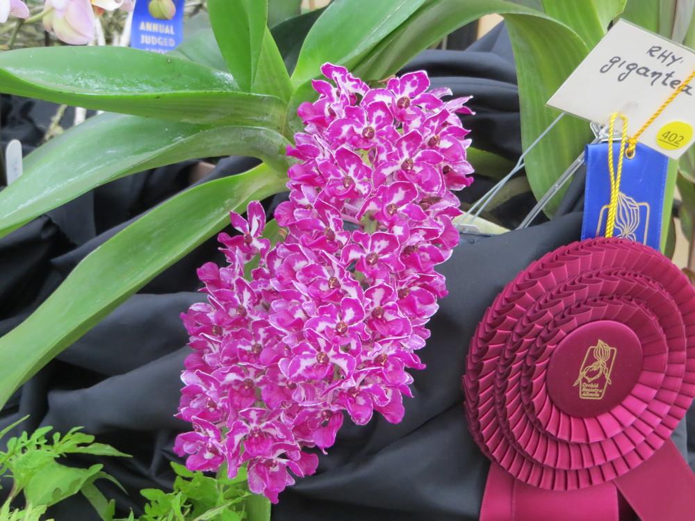 alterta orchid2014 096.JPG