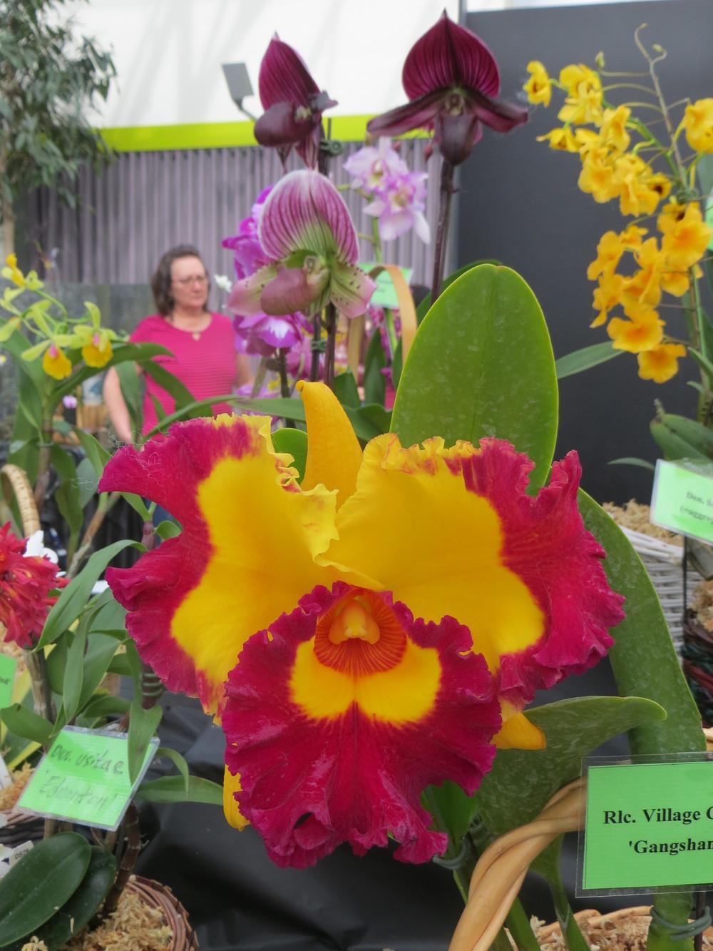 alterta orchid2014 057.JPG
