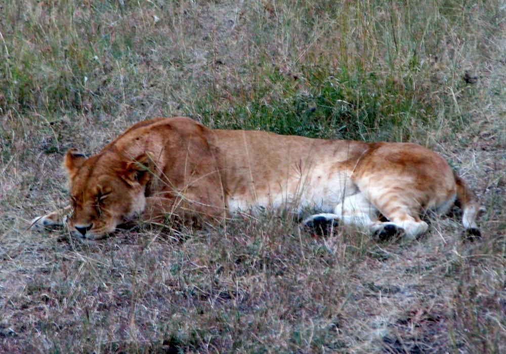 08-18-16 lions5.JPG