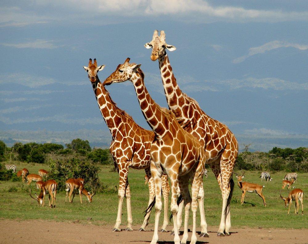 08-18-16 Giraffe2.JPG