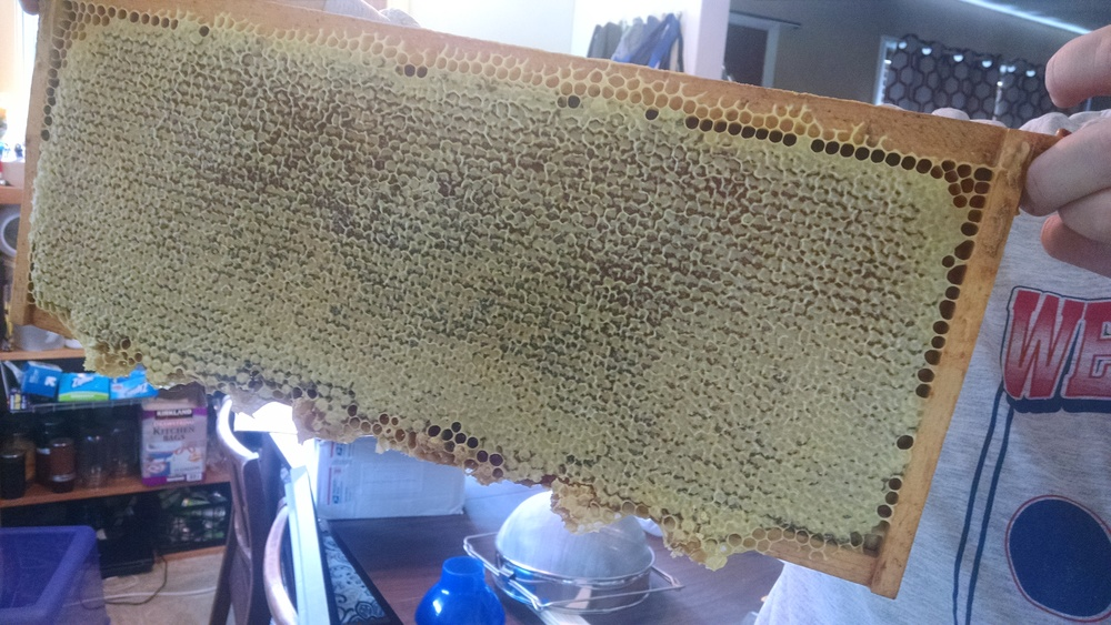 A frame full of capped honey. Pretty much the ideal frame.