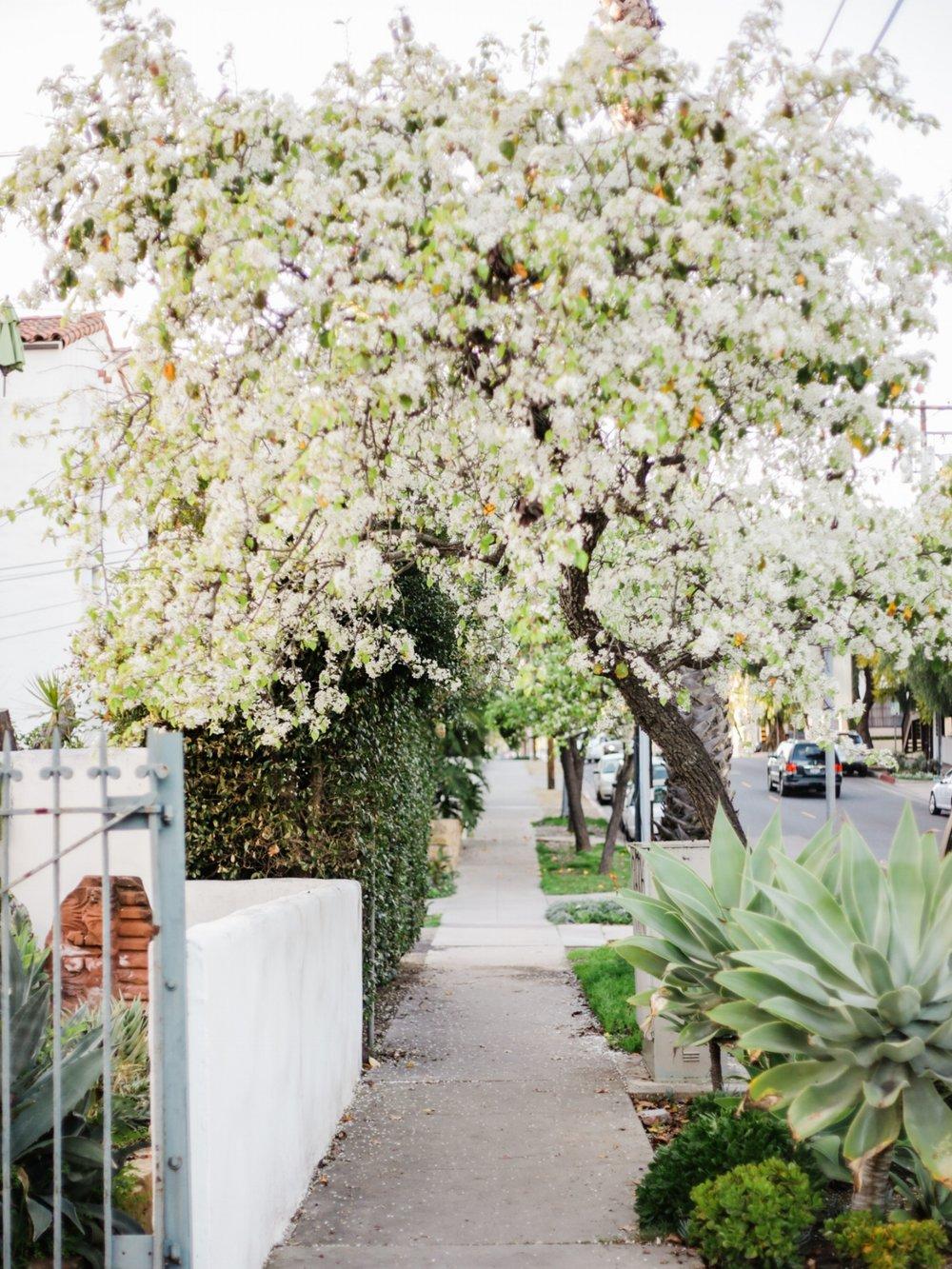 Santa-Barbara-Panino-Architect Corner-5.jpg