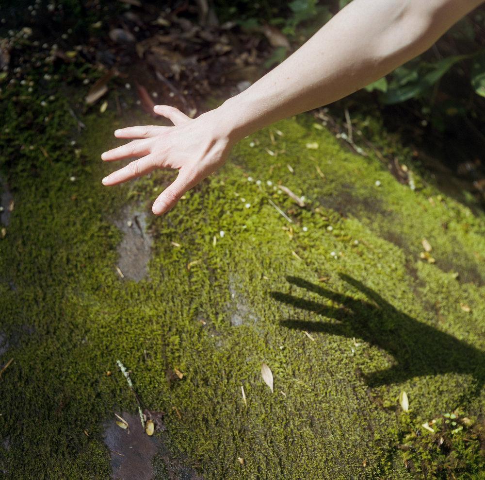 Hand moss shadow