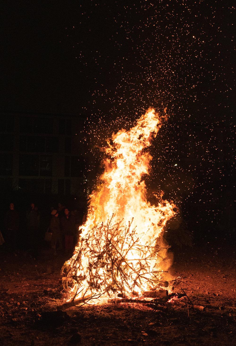 Burning Trees, Edinburgh, Scotland, January 2019, digital photograph