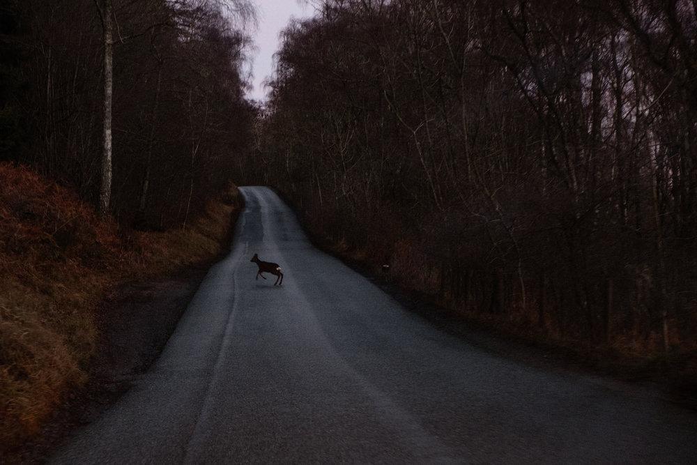 Deer, Scotland, January 2019, digital photograph