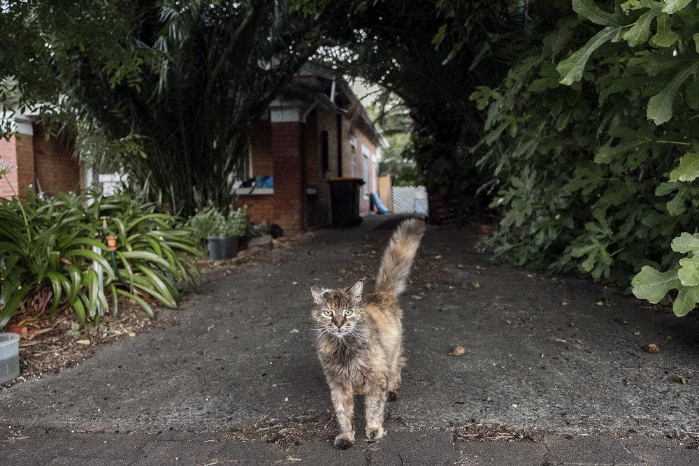 bonnie-saporetti_driveway-cat.jpg