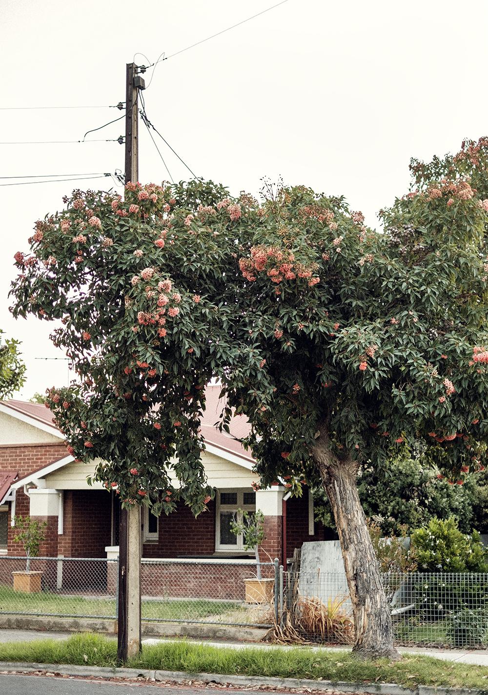 bonnie-saporetti_pink-tree.jpg