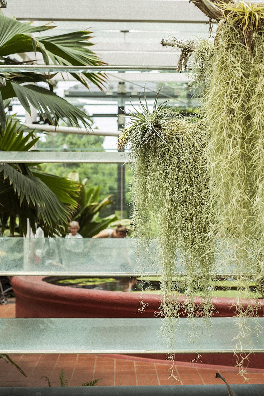 bonnie_saporetti-gardens-moss.jpg