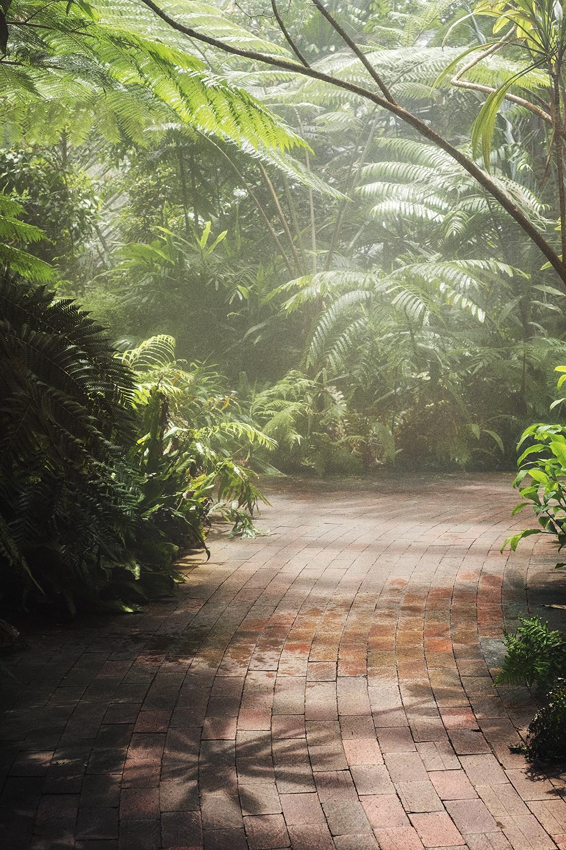 bonnie_saporetti-gardens-mist.jpg
