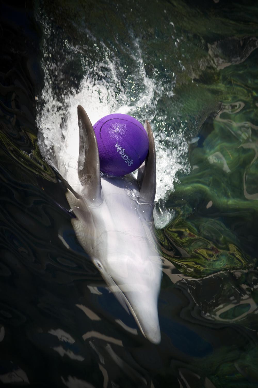 Play_Ball_Derek_Lyon