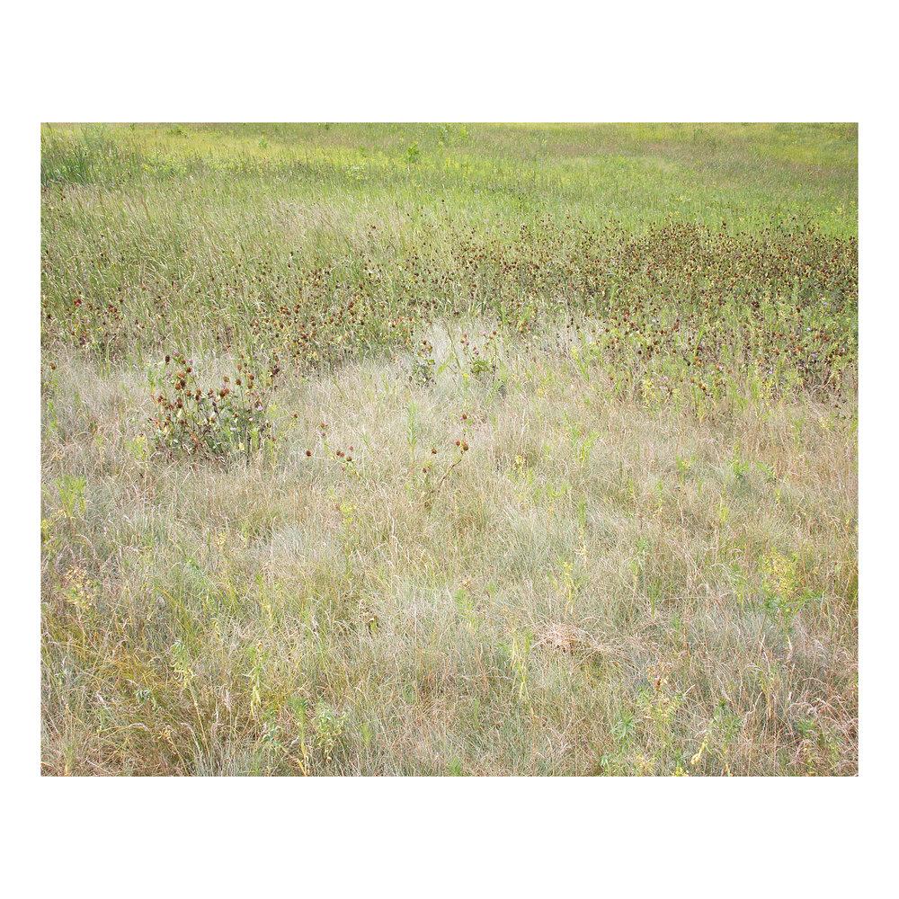 summer field.jpg