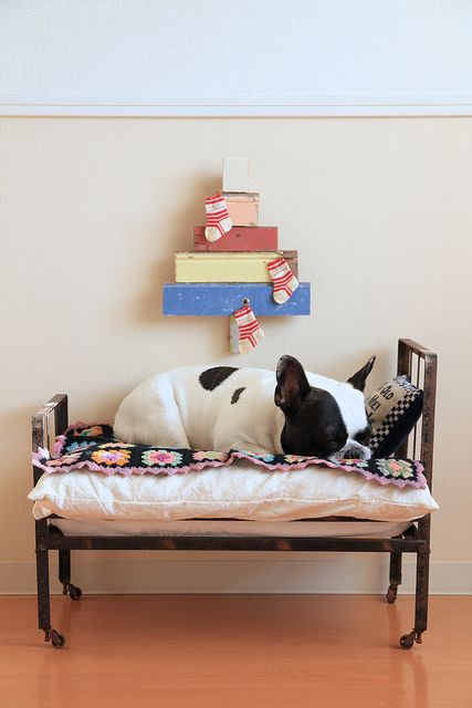 pied frenchie on bed.jpg