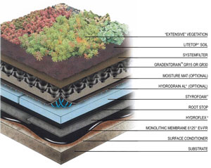 Green Roofing Navigating The Environmental Trending