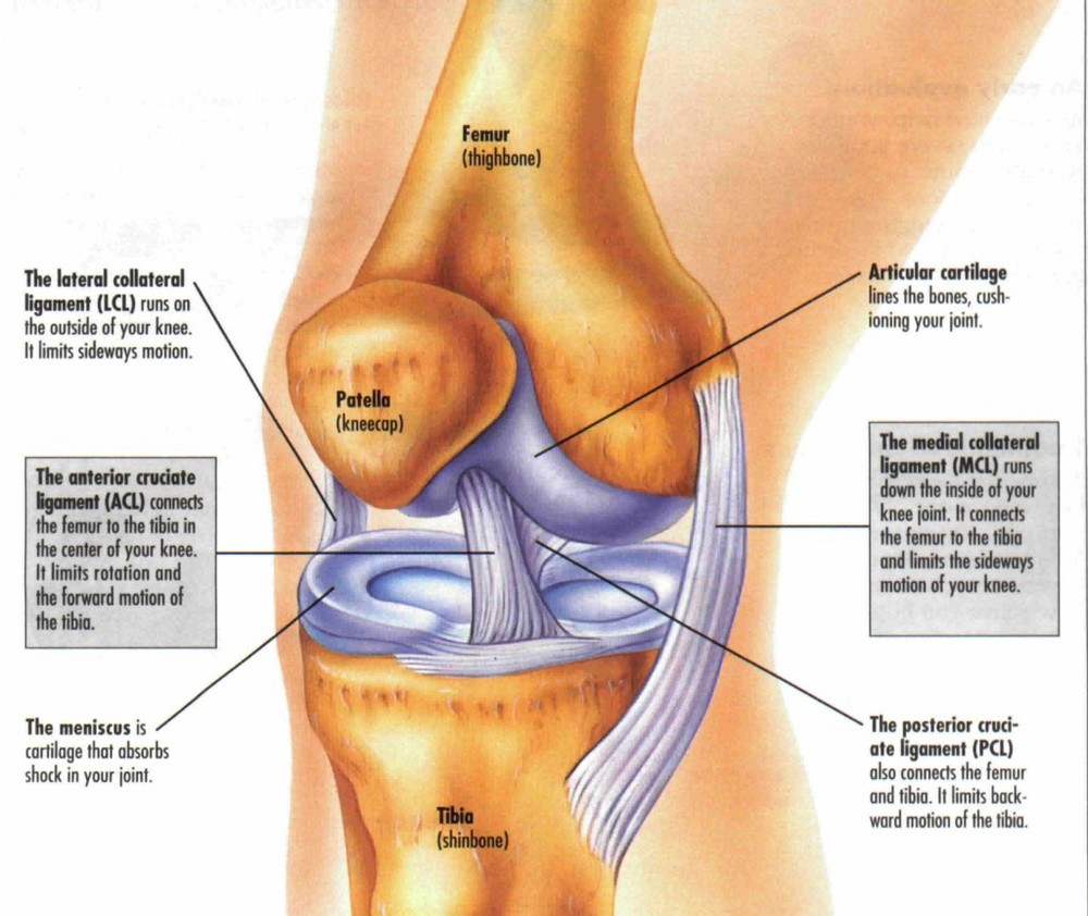 Acute Knee Injuries In Sport
