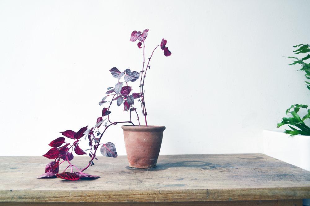 Botany-0017.jpg