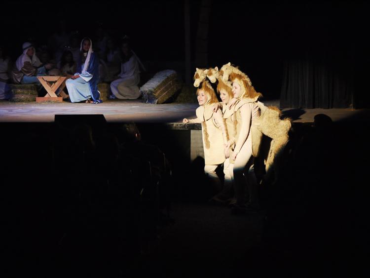 Camels3.jpg