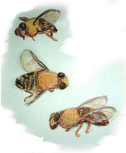 dead-bee.jpg