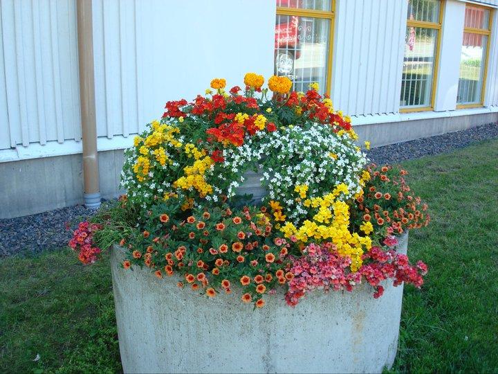 Apoteket utanför Systembolaget och Apoteket är en vad vi kallar för hotspot, allt trivs där. En av de skojigaste planteringarna vi gör då den alltid håller kanonbra med vattning, sol & vind!