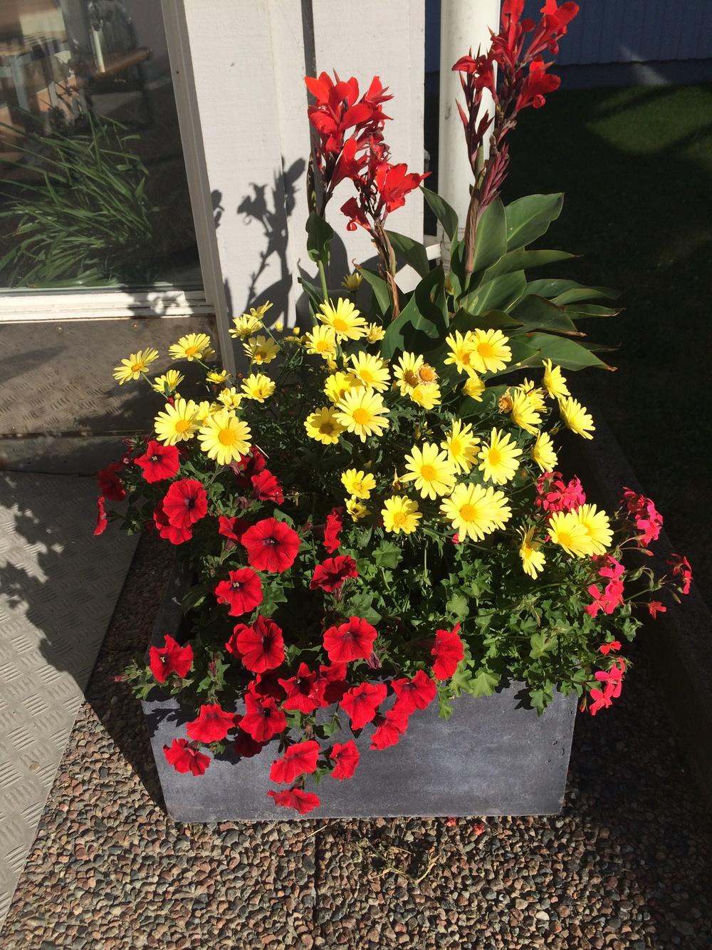 Öckerö Vårdcentral sommaren 2014 - ett färgsprakande fyrverkeri