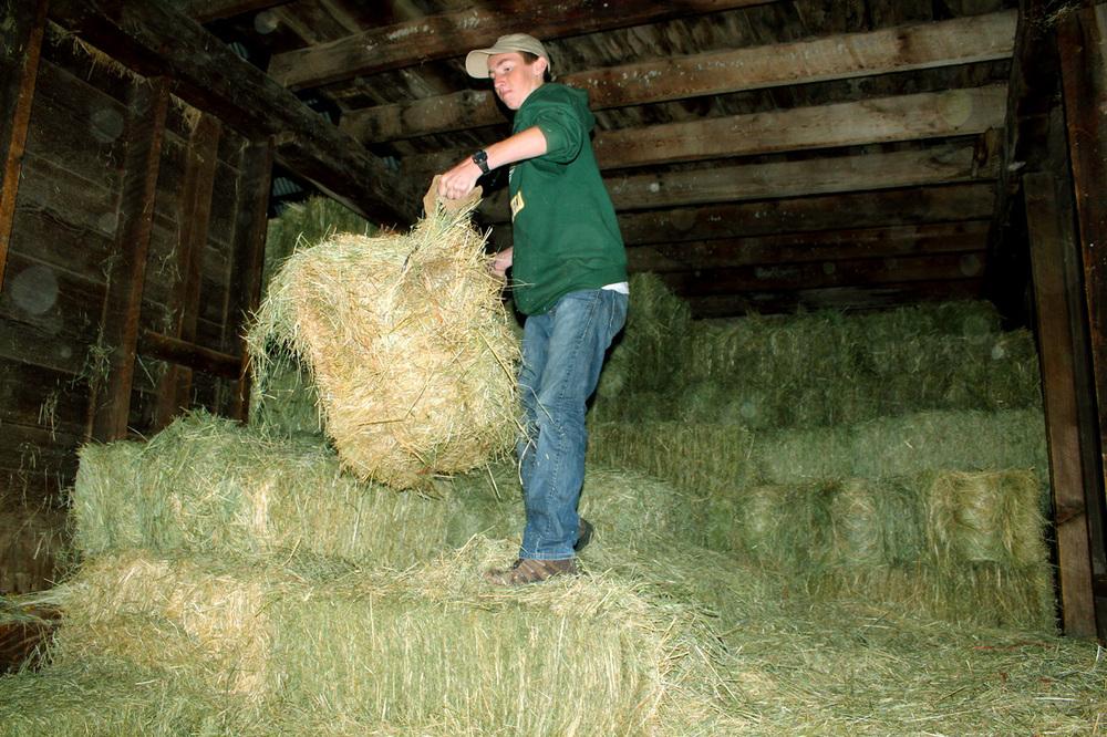 baling hay2.jpg