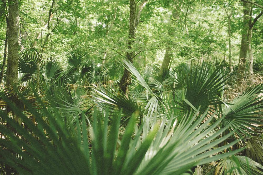 palmetto17-5.jpg