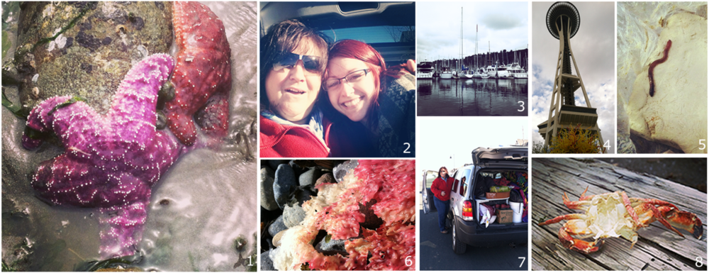 1. Colorful starfish I found at low tide in Lincoln Park 2. My mom and I right before we left MN to drive cross country to Seattle 3. Shilshole Bay Marina 4. The Space Needle from the  Dale Chihuly Glass Museum 5. We got a little suprise worm when we opened this bag of clay 6. Seaweed with awesome textures I found at Lincoln Park  7. My car all packed up ready to leave MN. I packed all the essentials- my wheel, clothes and favorite Wisconsin beer!  8. Crab shell
