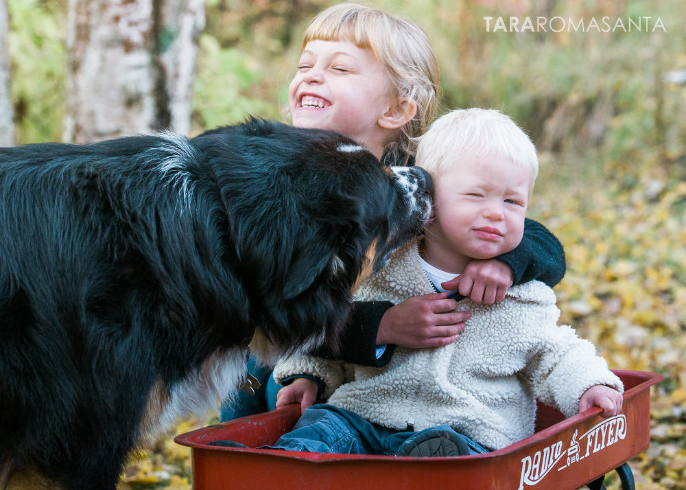 dog_kisses_little_boy_by_tara_romasanta