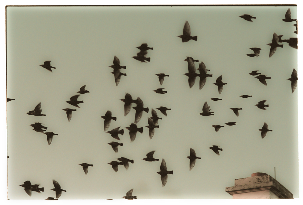 A_Postcard_a_Starling_Would_Mail_if_She_Had_a_Stamp.jpg