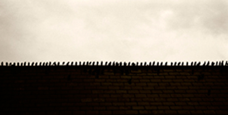 Starlings in a Row