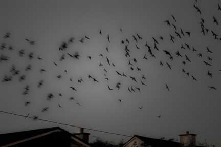 The_Night_I_Took_a_Wrong_Turn_and_Discovered_the_Starlings_of_Kilala.jpg