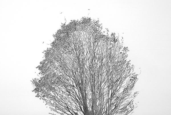 Tree_Top_Nikolai8b_web.jpg