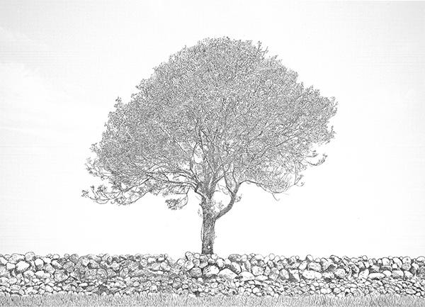 Tree_with_Rock_Wall_Nikolai6a_web.jpg