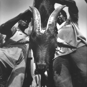 Otha Goat head