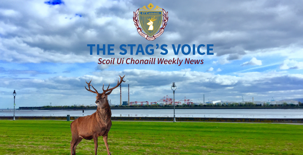Stag's Voice banner.PNG