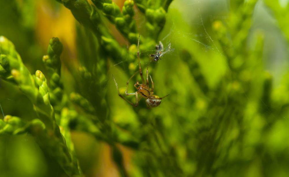 spindel.jpg
