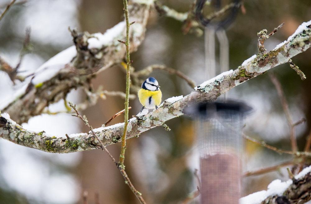 birds-04.jpg