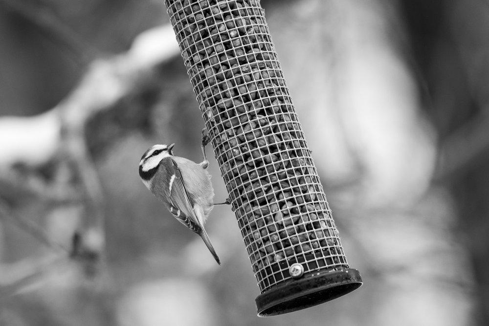birds-06.jpg