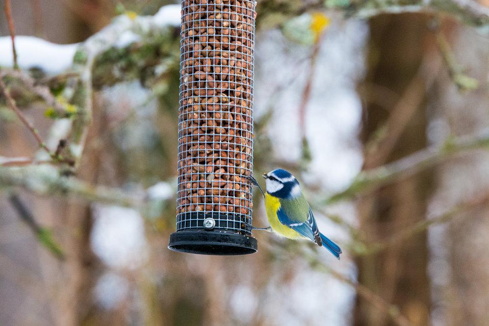 birds-08.jpg