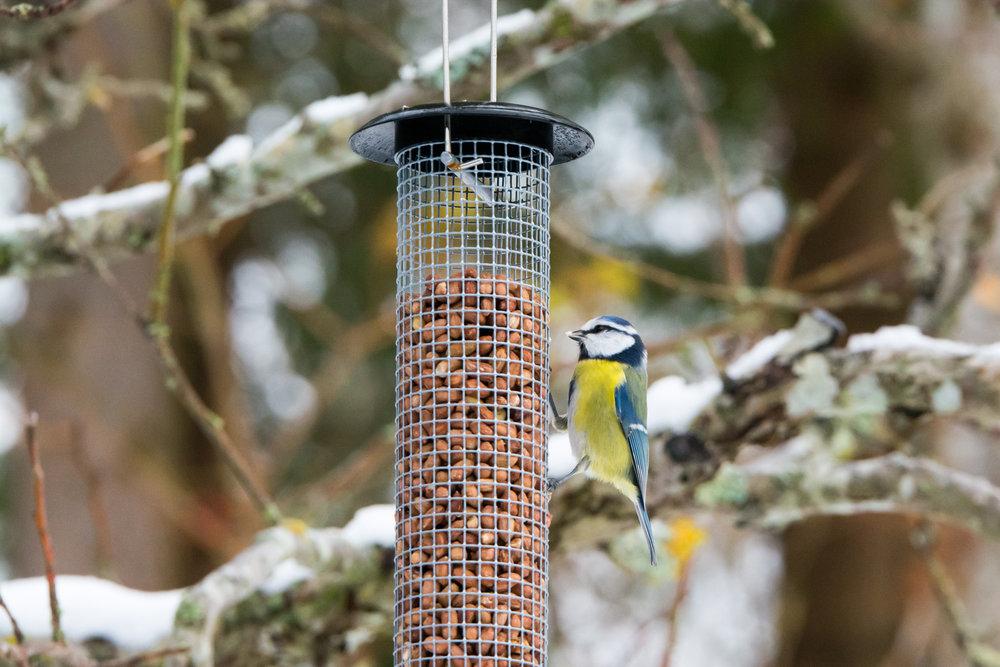 birds-10.jpg