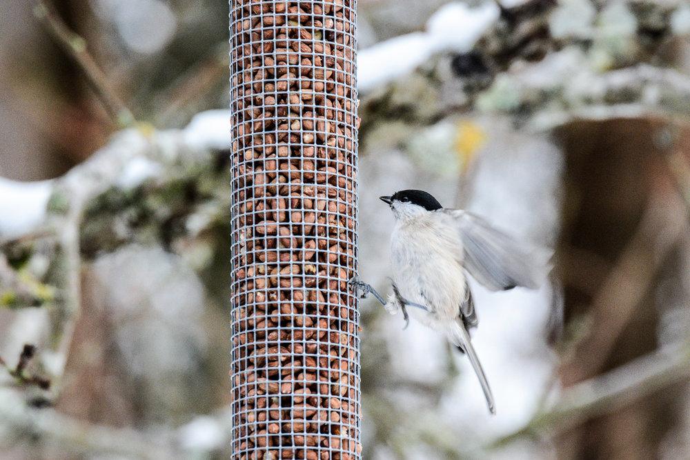 birds-14.jpg
