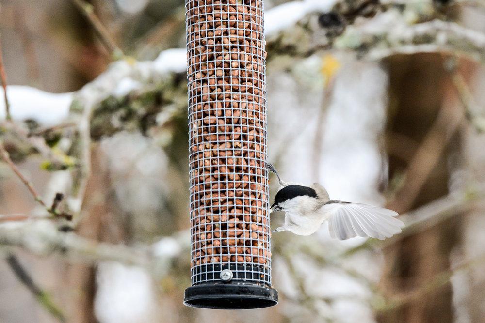 birds-15.jpg