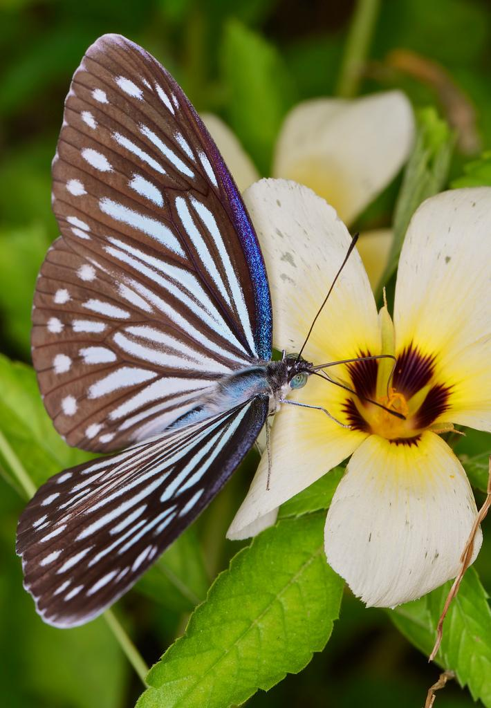 From cocoon to butterfly, we repeat our cycle of transformation over and over, throughout our human lifetime. Photo courtesy of Troup1.