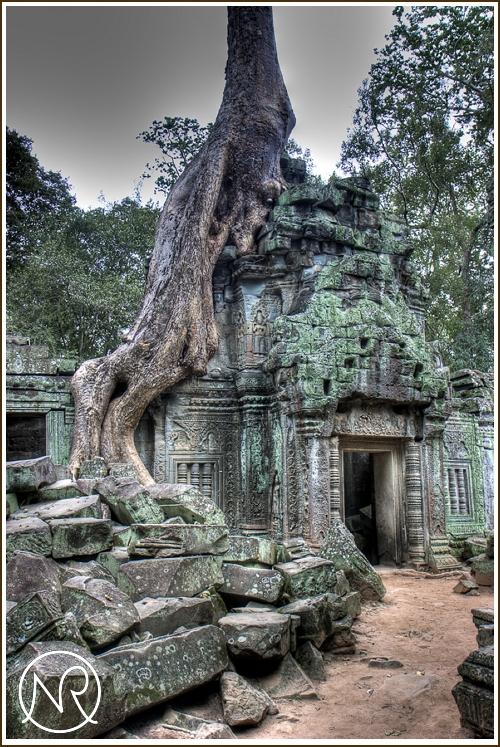 Ta Prohm Temple HDR Cambodia