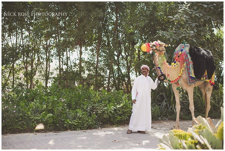 Man getting a camel ready for a Hindu Baraat entrance for a Hindu wedding at Sofitel Palm Dubai