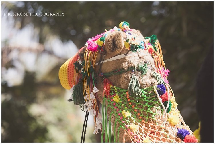 Camel decorated in headgear for a Hindu destination wedding at Palm Island in Dubai