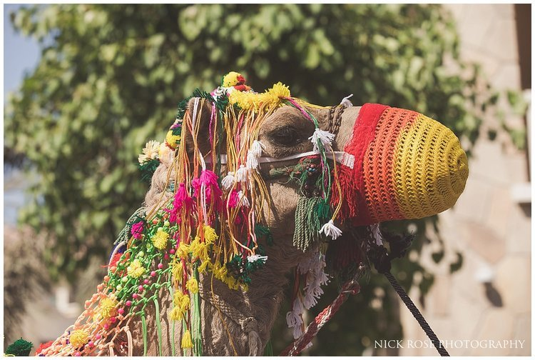 Hindu wedding camel dressed for an Indian Baraat in Dubai
