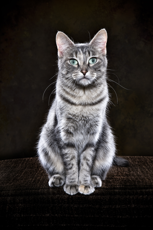 Greenies_Cats_096.jpg