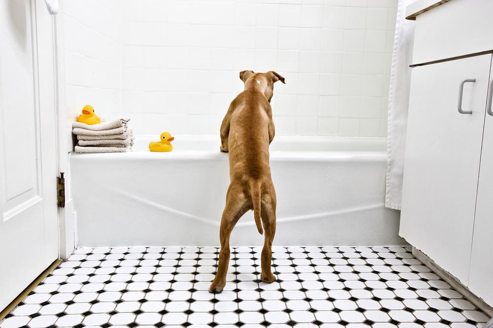 Puppy in Tub_0418.jpg