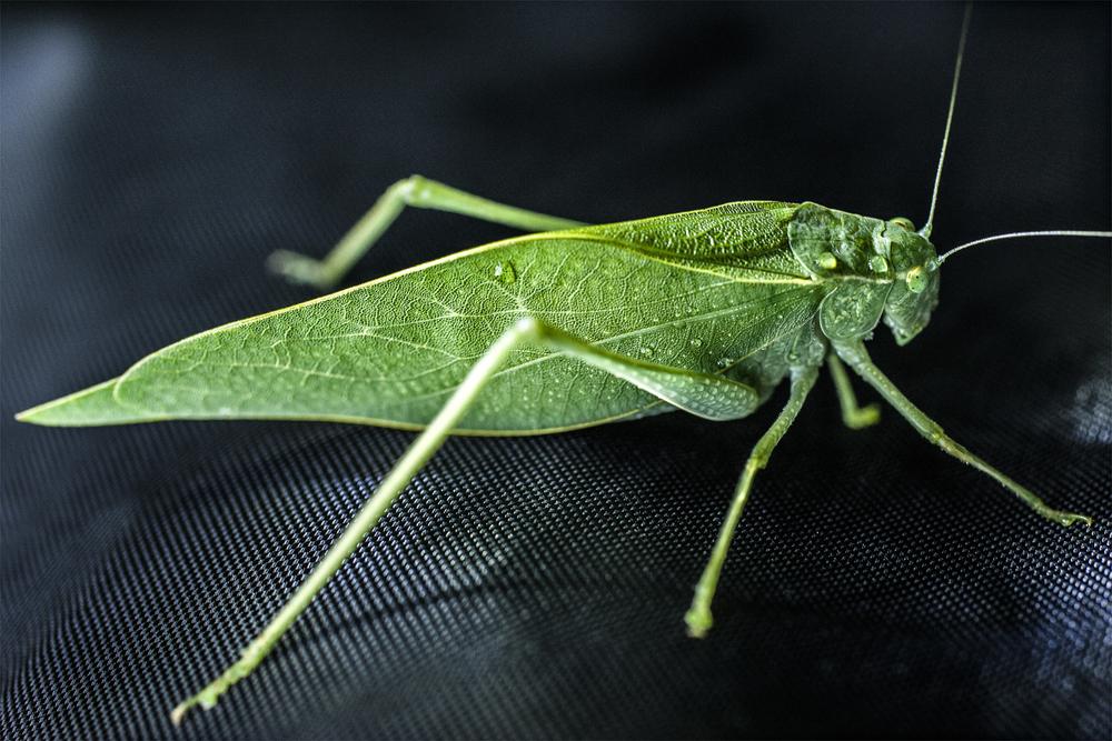 Grasshoper5123_1.jpg